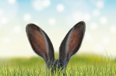 Ονειροκρίτης αυτιά - αυτί
