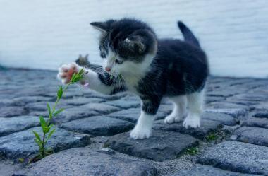 Ονειροκρίτης γατάκια