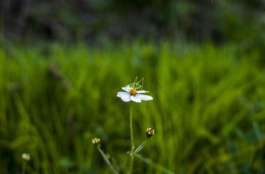 Ονειροκρίτης γρύλος έντομο