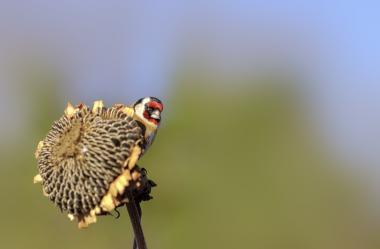 σκατά με μεγάλο πουλί η Τζένιφερ Ριβέρα πορνό