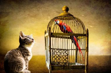 Ονειροκρίτης κλουβί