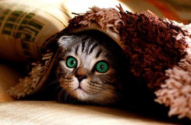 Ονειροκρίτης κρύβω - κρύψιμο