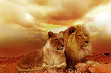 Ονειροκρίτης λιοντάρι - λέων