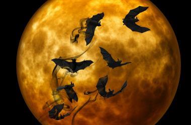 Ονειροκρίτης νυχτερίδα