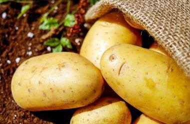 Ονειροκρίτης πατάτα