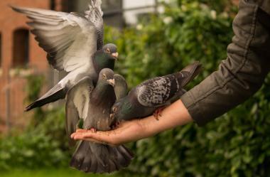 Πολύ μεγάλο πουλί σκατά
