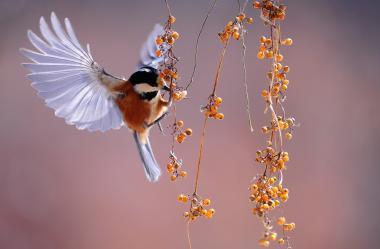 Ονειροκρίτης πουλιά (πτηνά - πουλί)