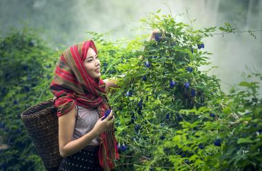 Ονειροκρίτης βότανα
