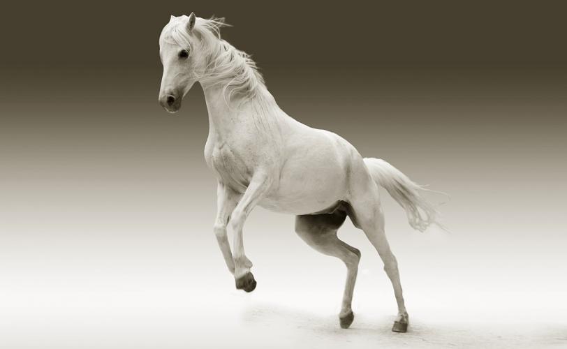 Ονειροκρίτης άλογο