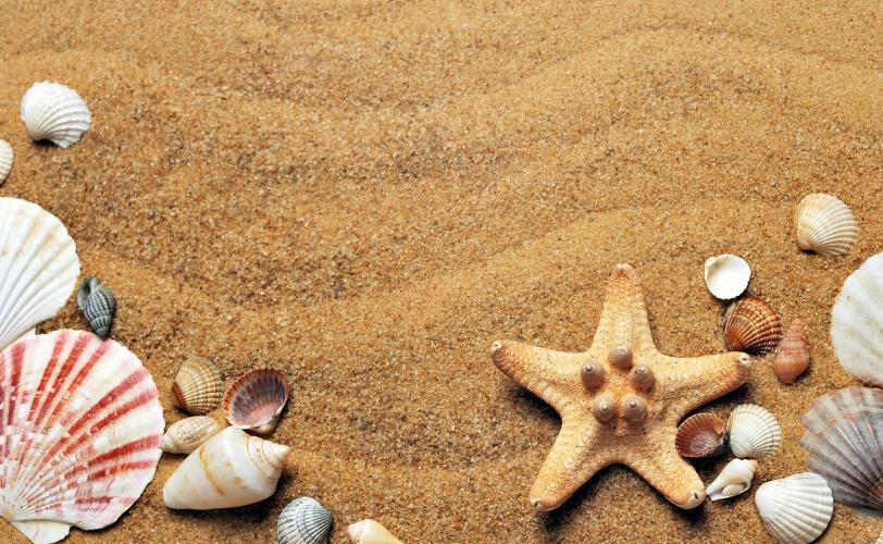 Ονειροκρίτης άμμος (αμμουδιά)