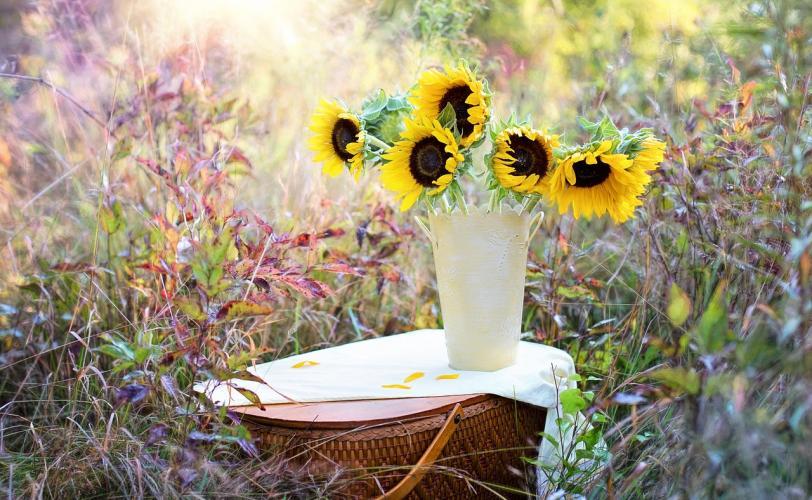 Ονειροκρίτης λουλούδια (άνθη)