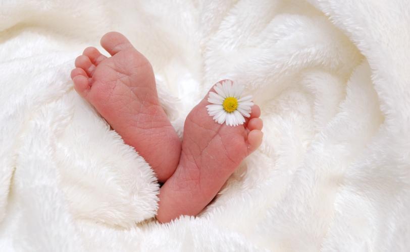 Ονειροκρίτης γέννα - γέννηση