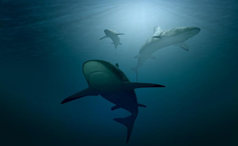 Ονειροκρίτης καρχαρίας