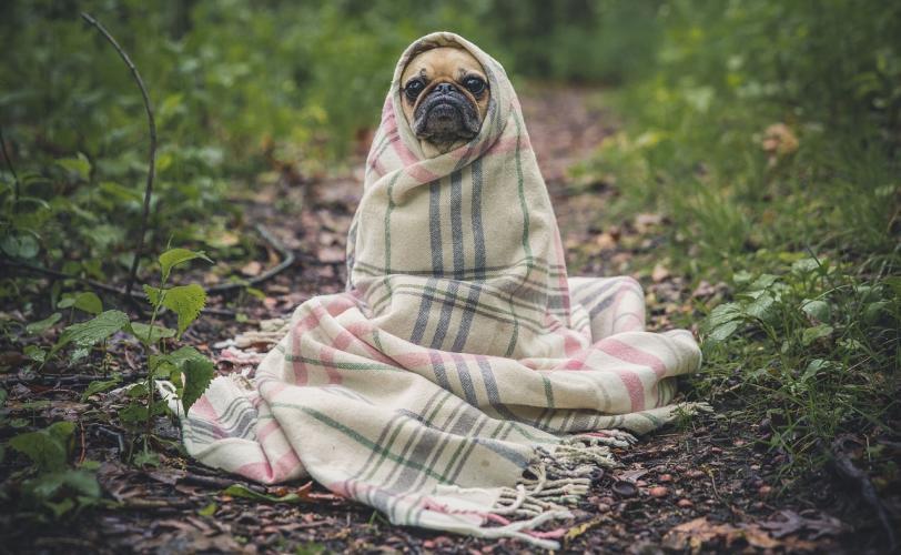 Ονειροκρίτης κουβέρτα (σκέπασμα)