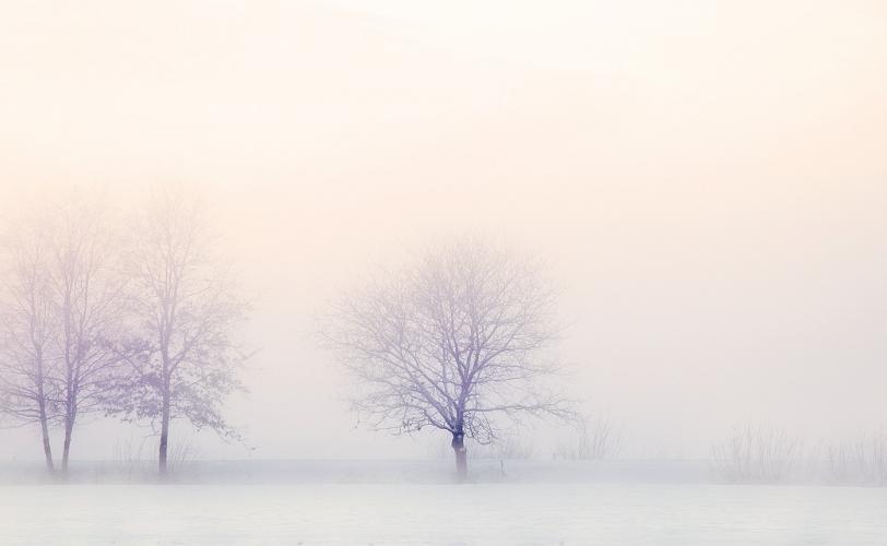 Ονειροκρίτης λευκός - λευκό (χρώμα)