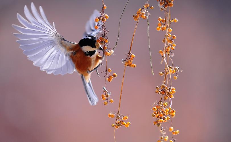 πουλί πολύ μεγάλο σκατά