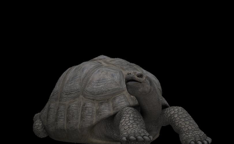 Ονειροκρίτης χελώνα