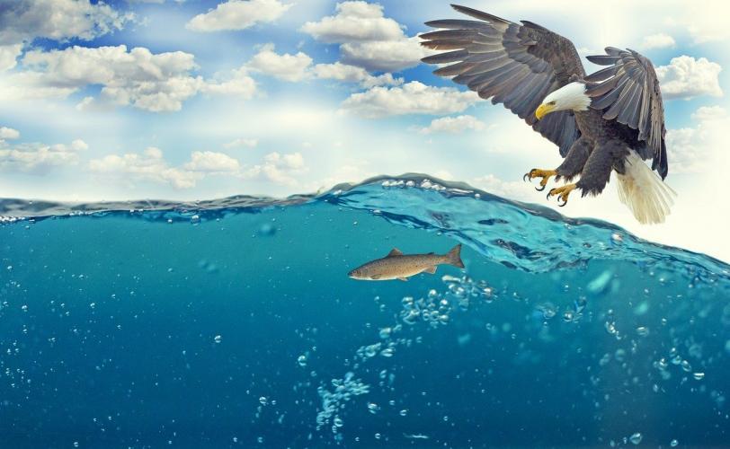 Ονειροκρίτης αετός